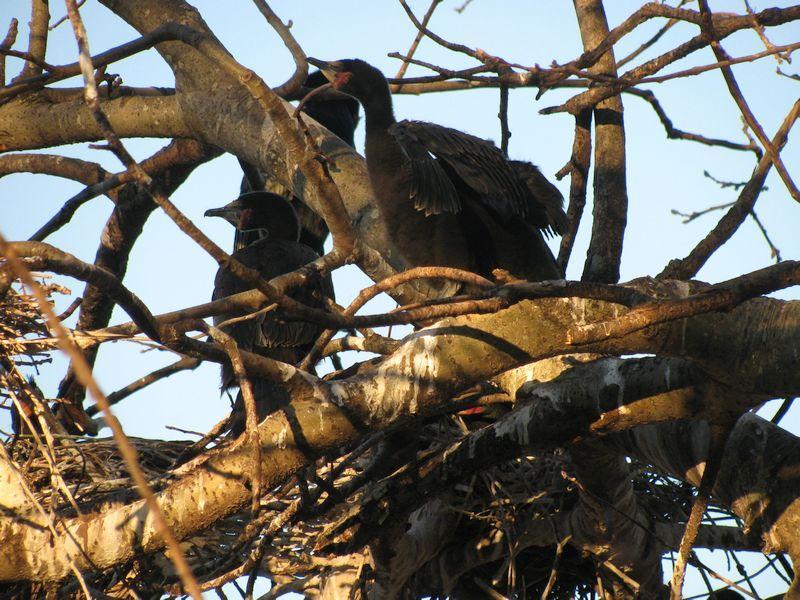 Die Oog birds in tree