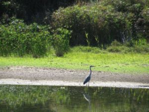 egret bird in Die Oog conservation wetland