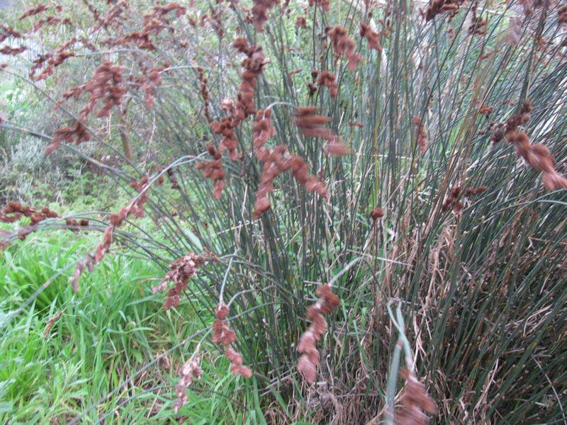 fynbos bush in Die Oog wetlands